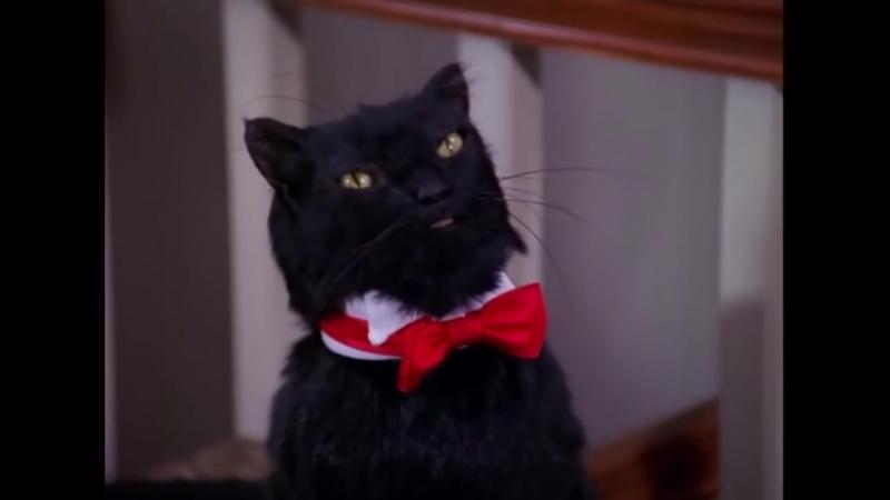 Сабрина маленькая ведьма ¦ Все моменты с котом Сейлемом