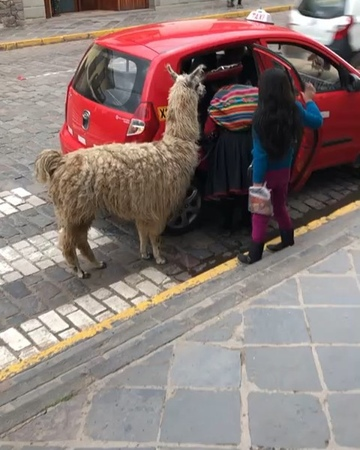"""ANDRE J MENDIVIL on Instagram: """"Something different 😅. My dad caught this on video while walking around the streets of Cusco, Peru. Check out @iger..."""