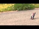Мотоцикл на радиоуправлении Silverlit Gyro Buzz с гироскопом