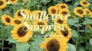 Sunflower Surprise Floral Display