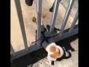 Ограничения для очень злой собаки