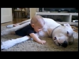 Собаки и дети - лучшие друзья!