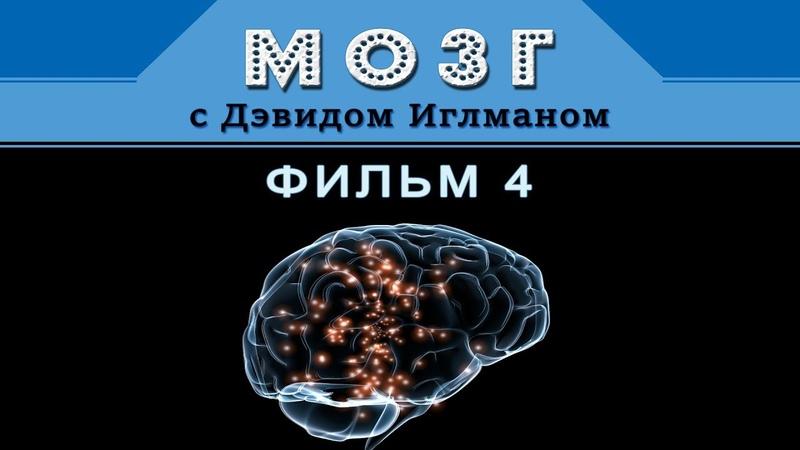 Мозг с Дэвидом Иглманом | Как я принимаю решения? | Фильм 4 || HD 720p
