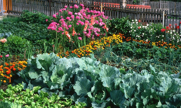 главные принципы планировки огорода максимум света. большинство овощей светолюбиво. лучше выбрать для огорода хорошо и равномерно освещенный участок. например, томаты снижают урожайность, даже