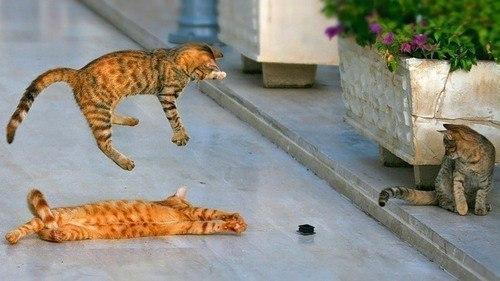 Ничто так не поднимает настроение, как выходки кота)))