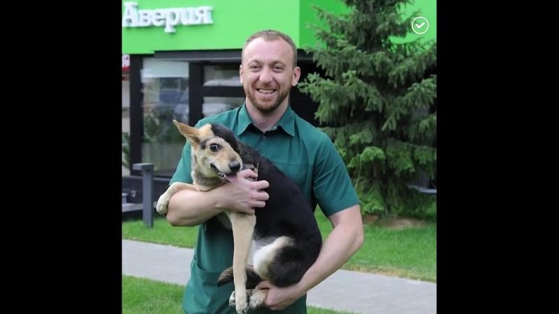 Человеческая доброта способна сотворить чудо Волонтеры из Волгограда подарили Рексу вторую жизнь
