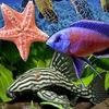 Аквариумные рыбки, аквариум, аквариумный дизайн