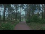 Гипнотическая сила ☔️ #afterrain #rain #forest