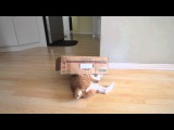 City the Kitty The box and mouse game