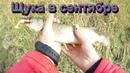 Рыбалка на щуку осенью. Рыбалка в сентябре на микроджиг. Щука в сентябре