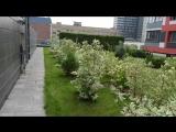zvezdaforum.com: приватный палисадник для жителей малоэтажки ЖК