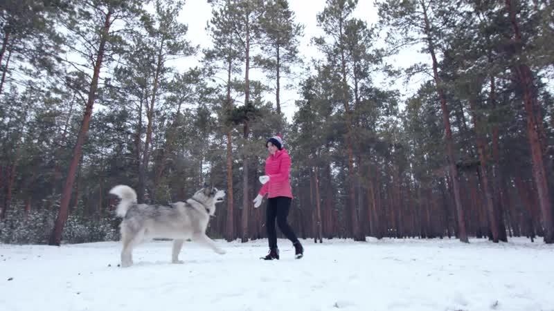 Salomon Dog