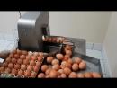 Вакуумный разбиватель яиц