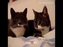 Смешные кота с матом