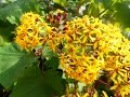 Желтые цветы, экзотические растения, декоративные кустарники, природа Испании, ...