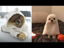 Cute baby animals Videos Compilation cute moment of the animals - Soo Cute! 47