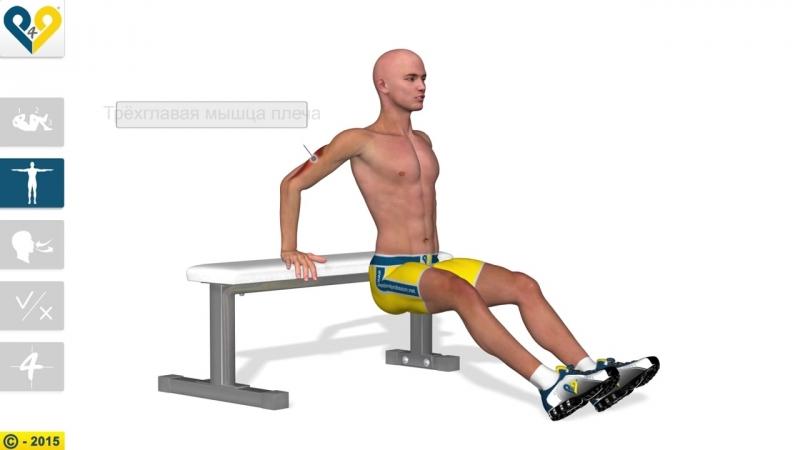 Как увеличить силу рук- Tricep bench dips