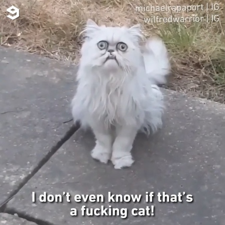 """9GAG: Go Fun The World on Instagram: """"This will haunt your dreams tonight 📹 @michaelrapaport , @iamrapaport 🐱@wilfredwarrior - cat 9gag"""""""