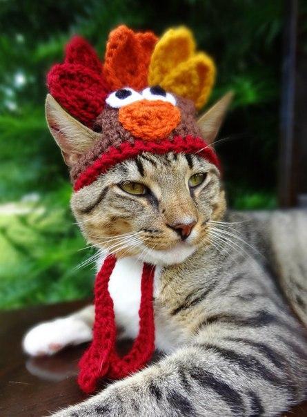 Шапочки для котов от Meredith Langley