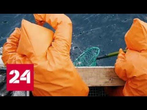 Рыба подорожает из-за запрета ее перевозки на иностранных судах - Россия 24