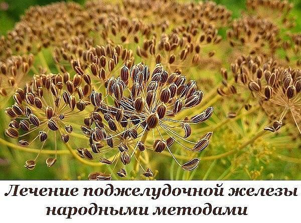 https://pp.vk.me/c7008/v7008793/31589/mCnITShTdCo.jpg