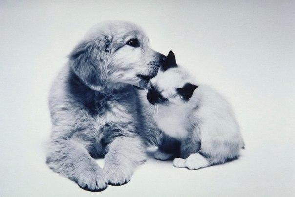Большинство мужчин похожи на собак. На вид грозные, любят рычать по пустякам, но, в сущности очень привязчивы. А большинство женщин, как кошки: ласково мурлычат и никто не знает, что у них на уме.
