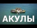 Кино 2017 Новинка Империя Акул Мощный Фильм