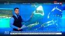 Новости на Россия 24 Подводная охота в Таиланде спасшийся на буе турист вернулся домой