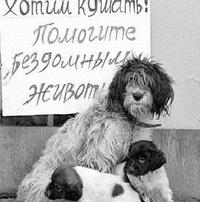 Спасение бездомных животных в астане