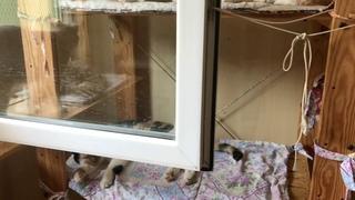 Послеобеденный полудрем (приют для котиков г. Снежинск)