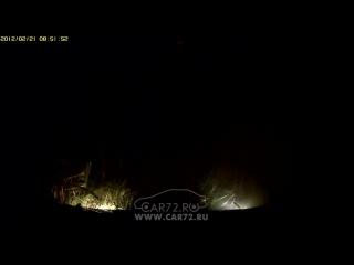 Мертвый кабан лежит на дороге