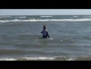 Woman Saves Beached Baby Dolphin - 995019