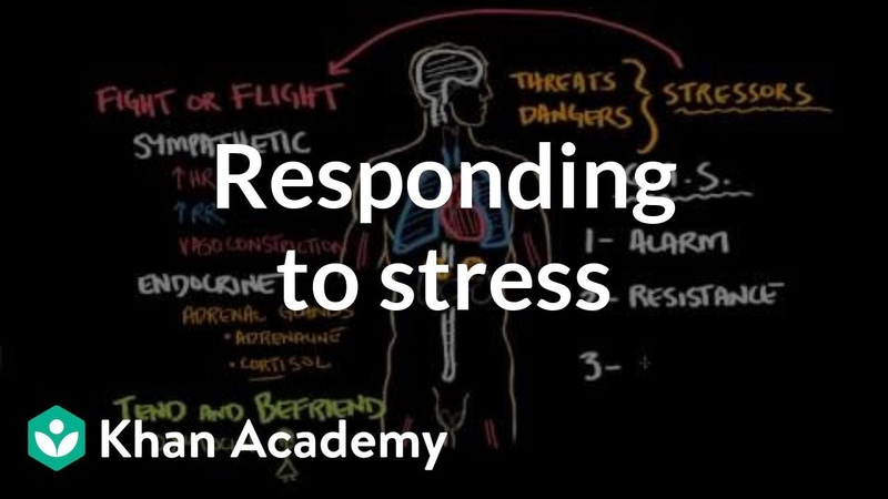 Responding to stress Processing the Environment Khan Academy