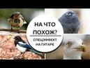 Как изобразить Птицу на ГИТАРЕ Спецэффекты УГАДАЙ на что похоже