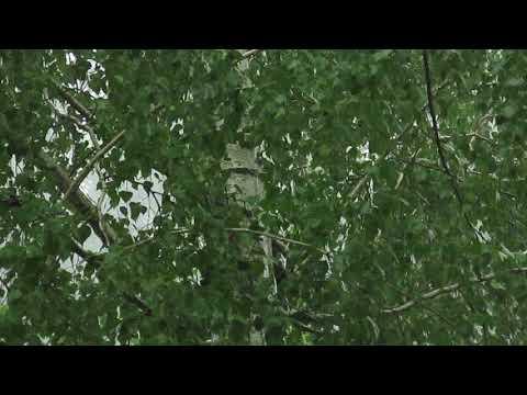 Грозы в Воронеже уже больше недели видео сергей лаврентьев 20 07 18 г
