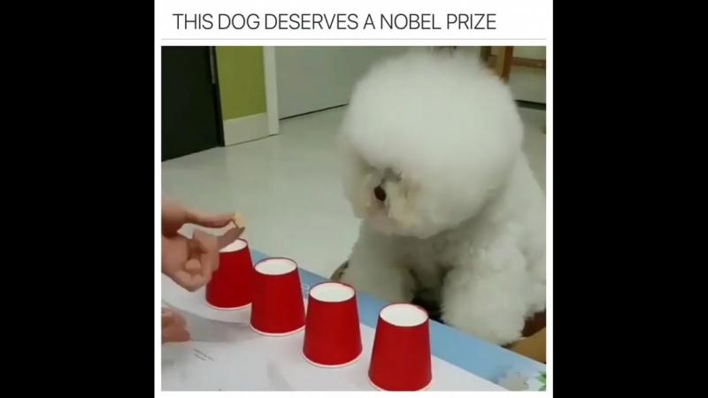 This-dog-deserves-a-nobel-prize-whos-a-good-boy-31911153 (1)