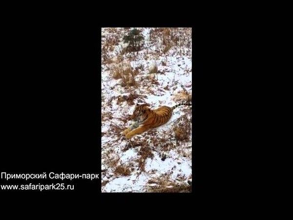 Осторожный Амур и бесстрашный Тимур Friends tigger and goat