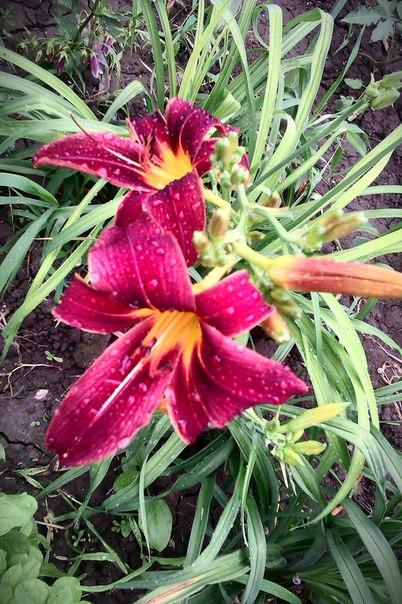 После дождя,цветочки улыбаются.