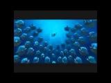 Новый мультфильм Белка Ледниковый период Смешные мультики 2013