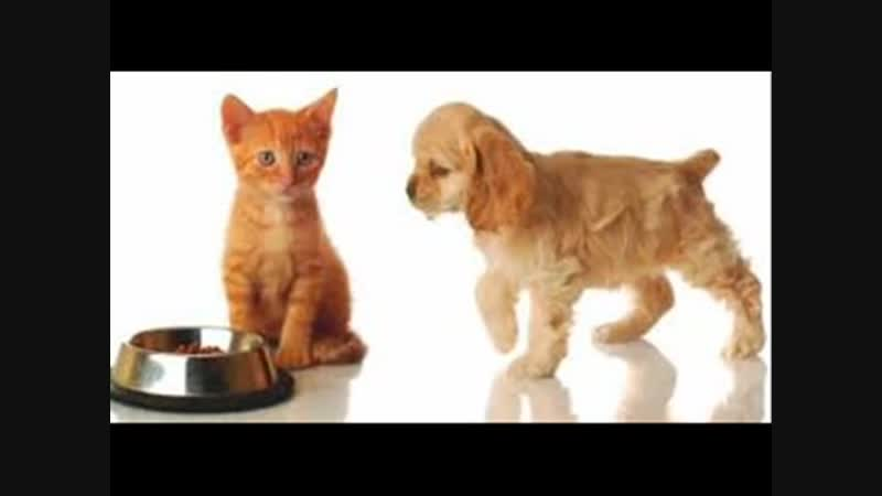 Szokująca prawda o pokarmie dla zwierząt domowych