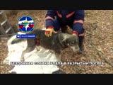 Помощь собаке, упавшей в погреб