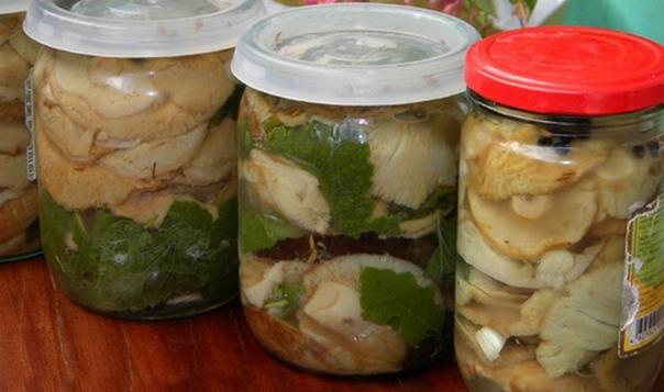 волнушки, соленые холодным способом волнушки – грибы, которые отлично подходят к засолке. приготовить их можно по-разному – замариновать, засолить горячим и холодным способами. самыми