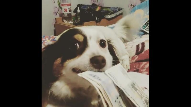 Пёс шарит