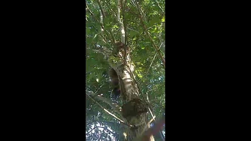 Джек загнал Капика на дерево