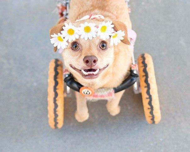 Էֆթանազիայից փրկված շունը վայելում է կյանքը (ֆոտոշարք)