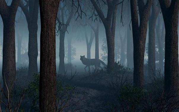 Почему нельзя разговаривать в лесу с незнакомыми волками Тропинка вилась, петляла среди деревьев, то ныряя в самую чащу, то выбираясь на солнечные полянки, заросшие мелкой земляникой. На