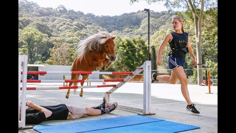 Crunch ★ FREE JUMPING 4 ★ (NEW) Miniature Horse Jumping Champion 4K