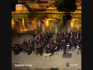 a very important meowrchestra performance