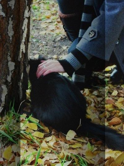 Ксения Будянская, 28 декабря 1991, Ульяновск, id190177504
