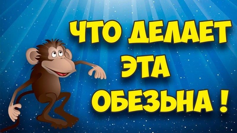 ПозитивBang│Посмотрите что делает эта обезьяна ! │Приколы с животными👍